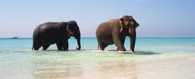 Photo éléphants se baignant dans la mer transparente