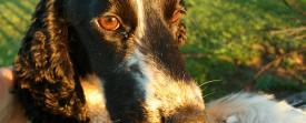 Photos de Chiens et chats... en nouvelle zélande