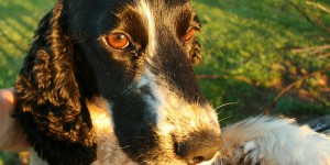 Photos de Chiens et chats… en nouvelle zélande