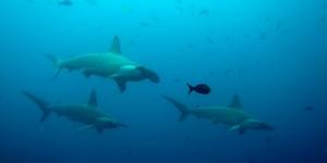 Top 10 des plus belles Plongées Sous Marine dans le Monde !