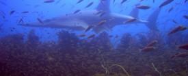 Plongée sur une épave - 3 des meilleurs bateaux à visiter sous l'eau !