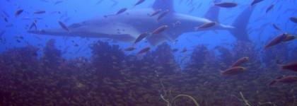 Plongée sur une épave – 3 des meilleurs bateaux à visiter sous l'eau !