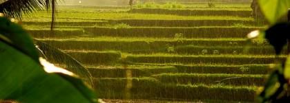 Itinéraire d'un voyage en Indonésie