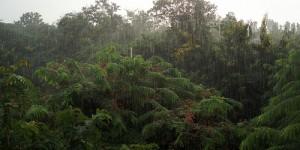 La vue de ma chambre pendant la mousson