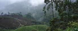 Trek waterfalls (chutes d'eau) à Munnar