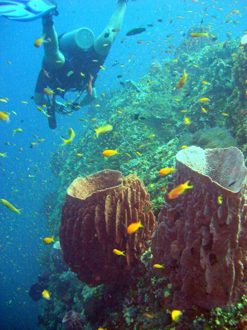 plongeur au dessus du corail