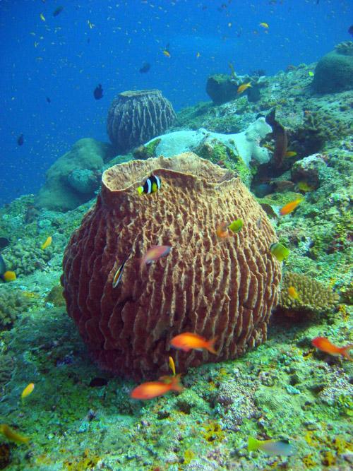corail en forme de cheminée