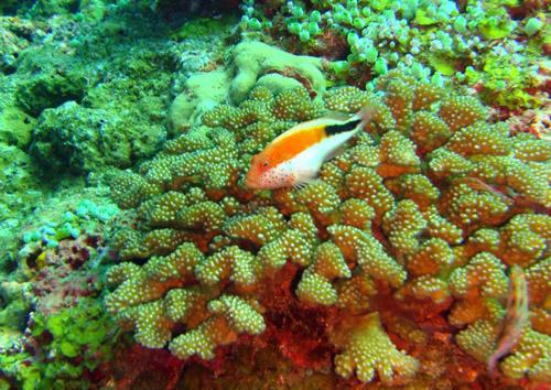 corail et poisson dont je ne connais pas le nom