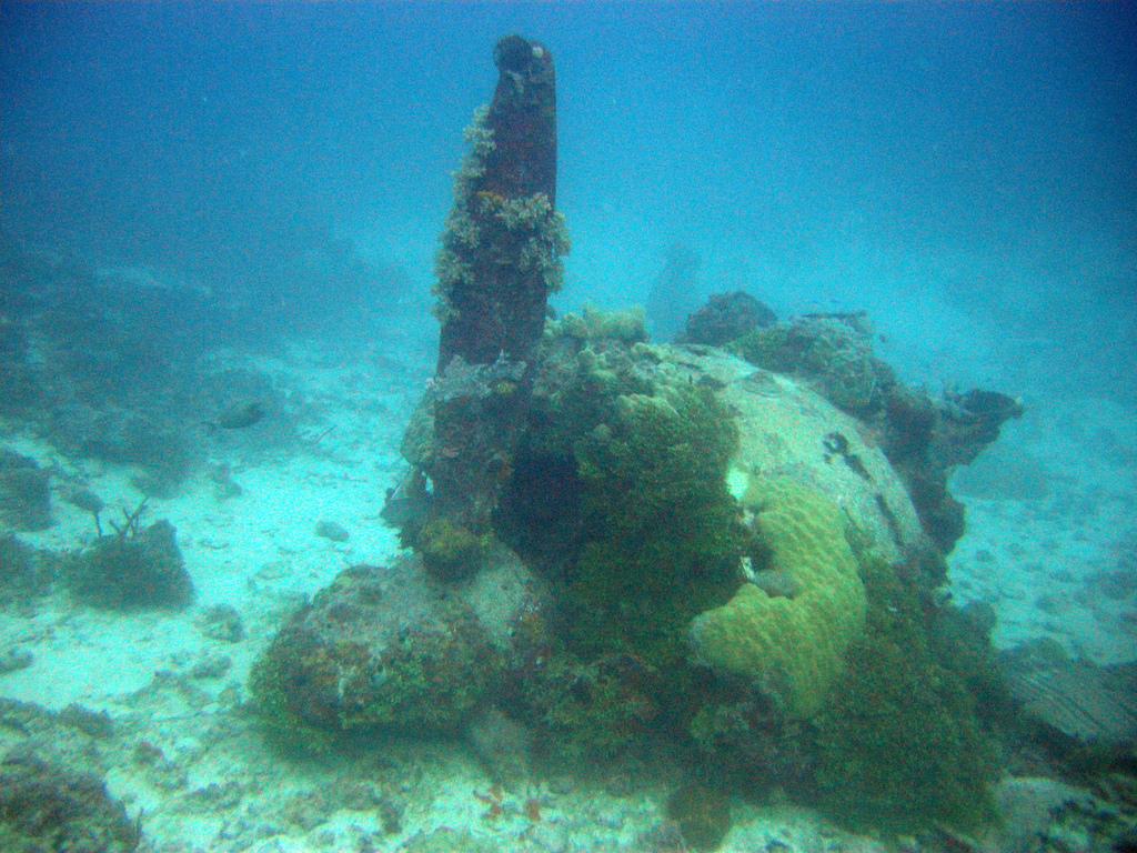 Top 10 des plus belles plong es sous marine dans le monde blog phot - Endroit paradisiaque dans le monde ...